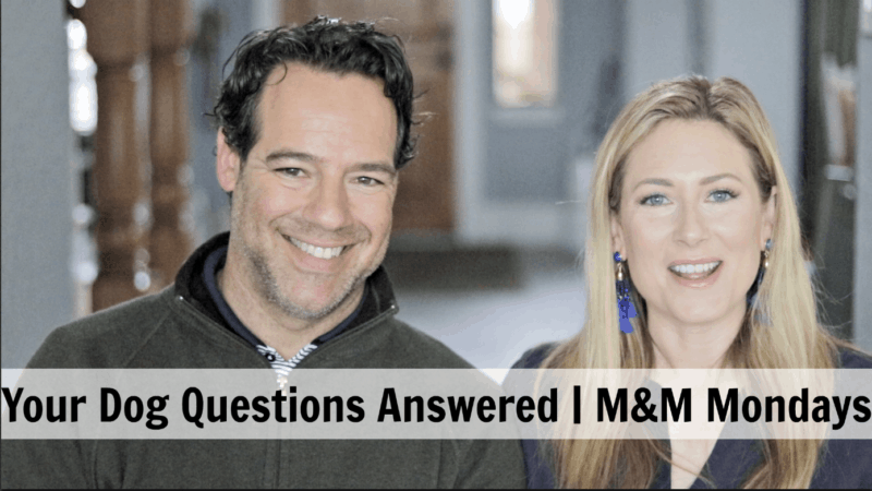 All About Dogs with Marnie and Michael Monday
