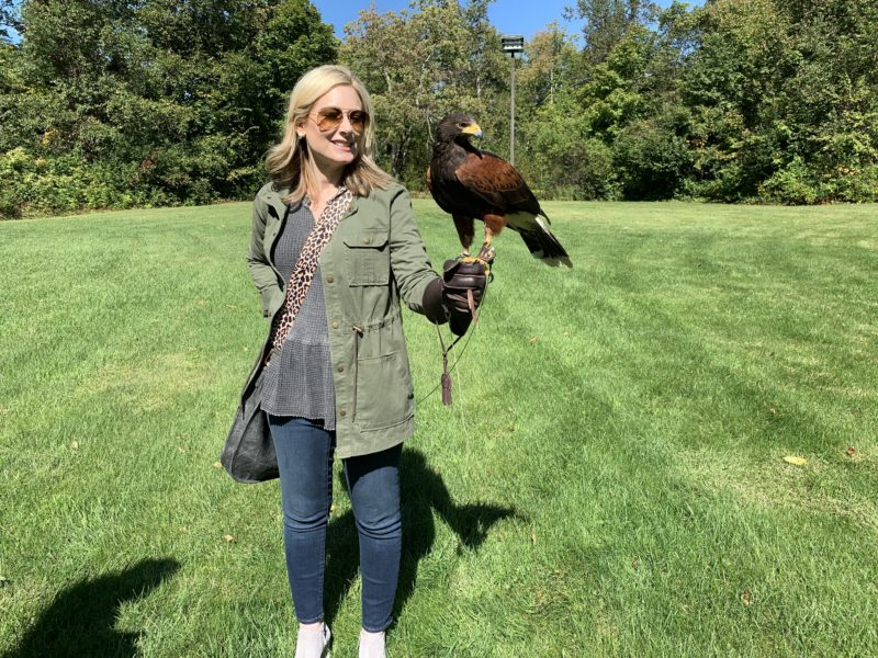 Falconry School at the Equinox