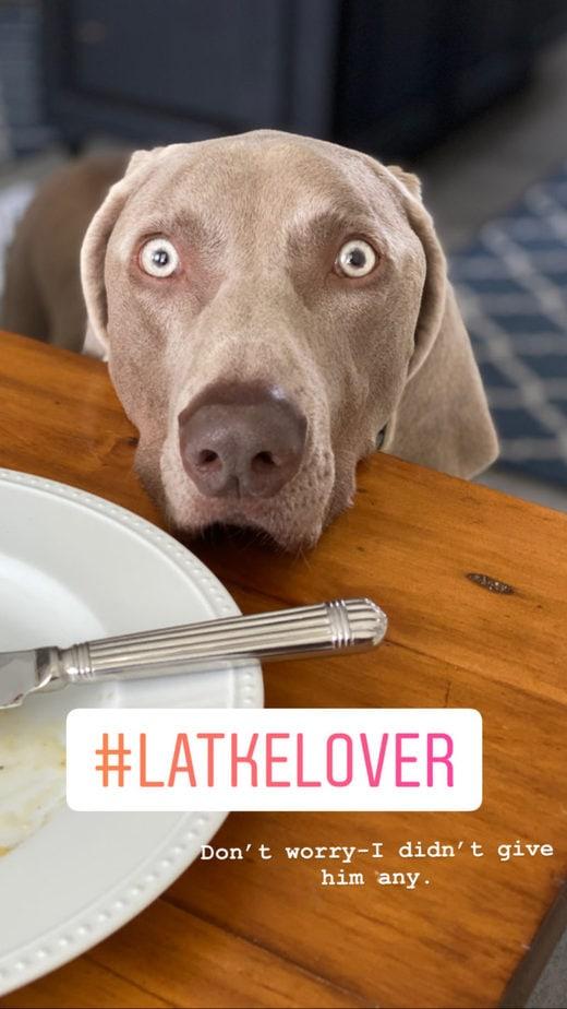 Latke Lover